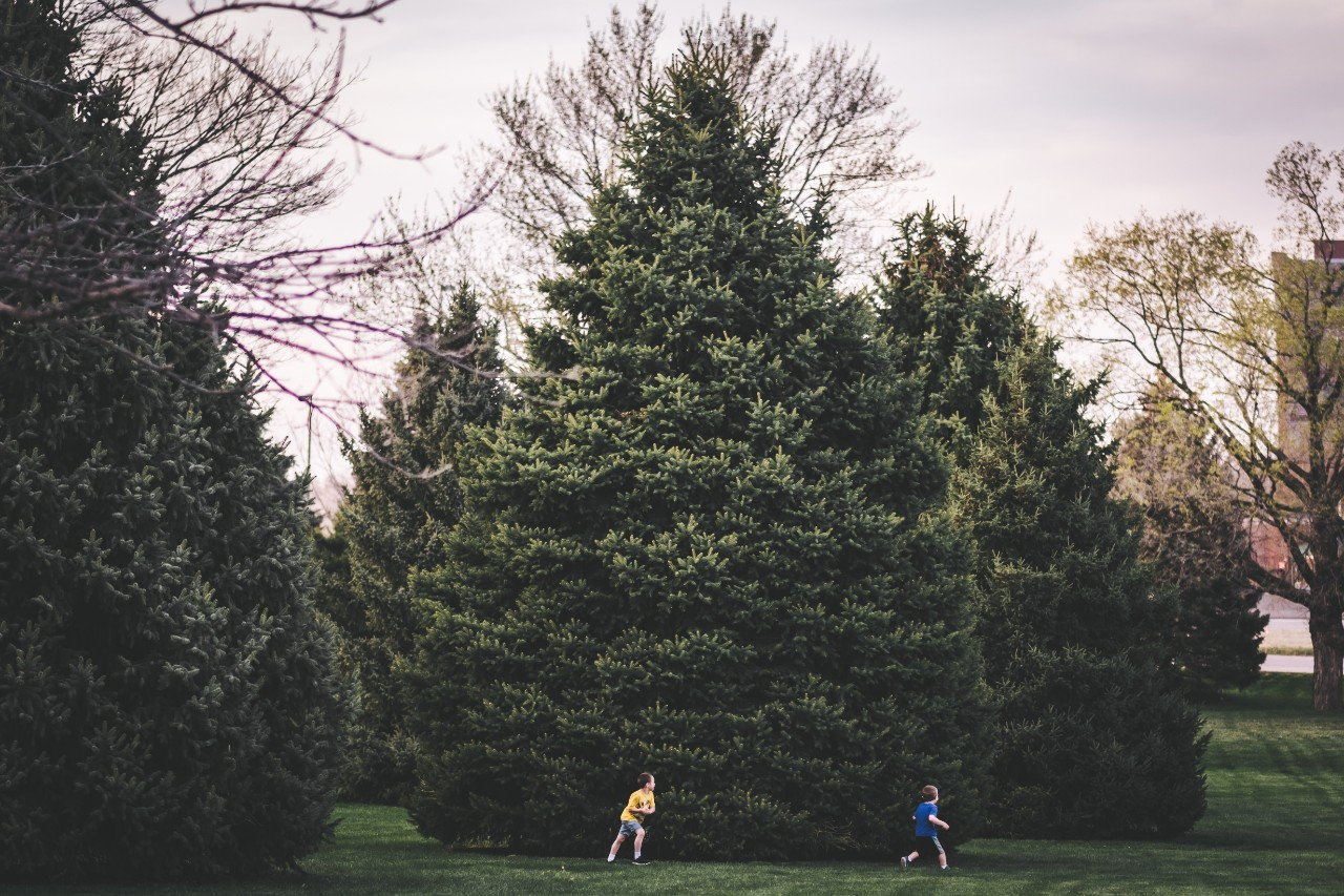 Children playing amongst trees